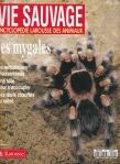 Les araignées Vie sauvage les mygales